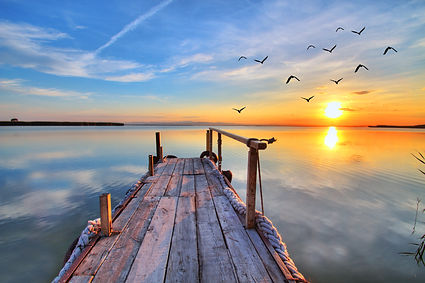 lake birds - purpose 2.jpg
