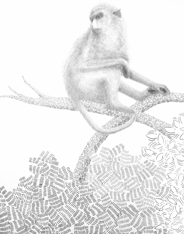 dessin singe sur la branche
