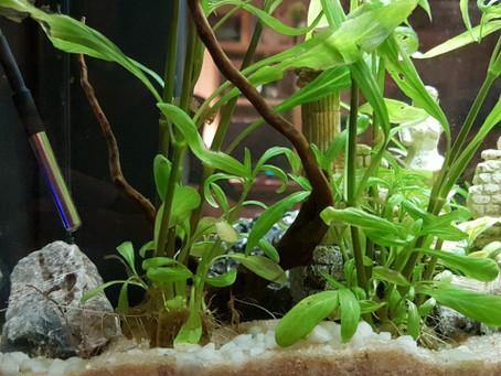 Aquapi DIY monitoring aquarium: les capteurs - partie 03