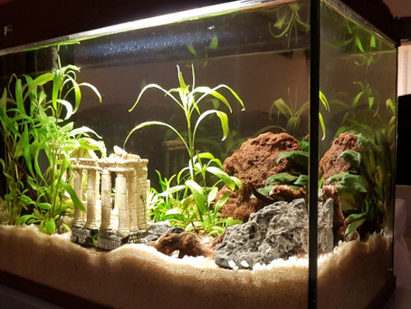 Aquapi: DIY monitoring aquarium - partie 01