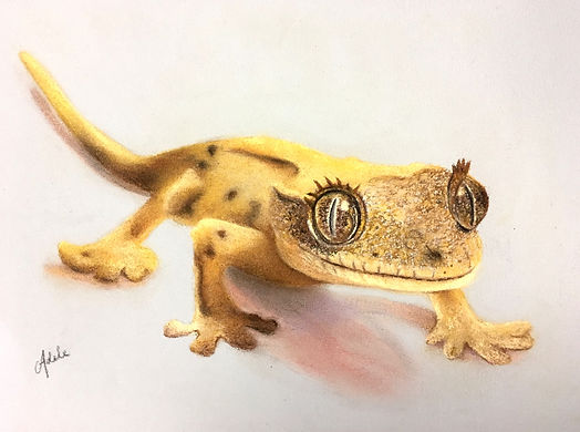 geckoA.jpg