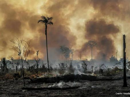Surtos epidêmicos são mais prováveis em áreas de desmatamento, segundo estudo