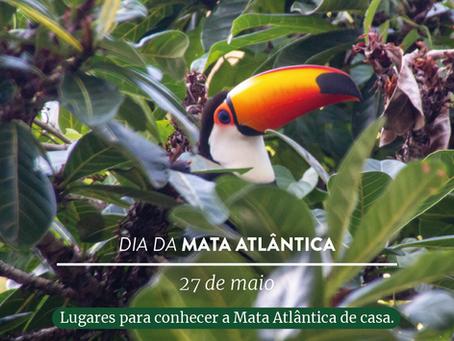 Dia da Mata Atlântica: lugares para visitar online e conhecer