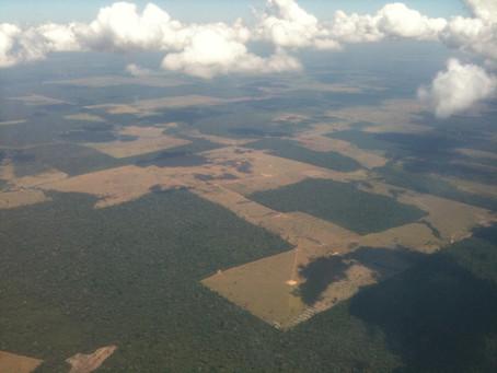 The Amazon deforestation, in 2019