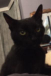Kathryn Monks' cat, Stella.