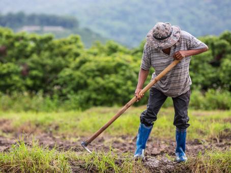 Dia Mundial do Campo: Práticas agroflorestais podem reverter a degradação do solo