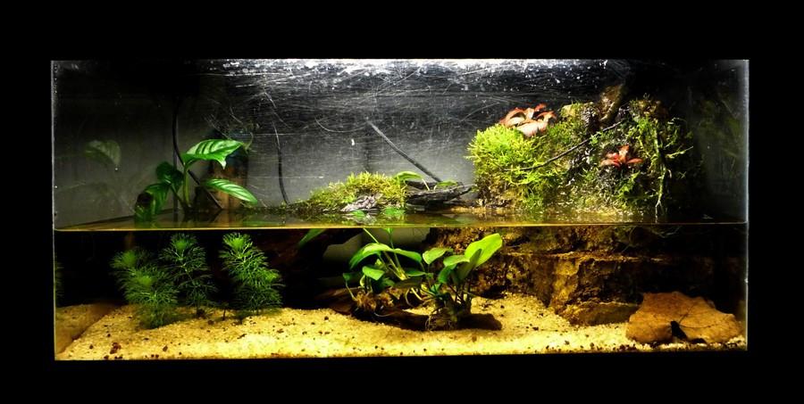 L'expérience de la grenouille dans l'aquarium