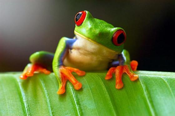 Expérience avec la grenouille adaptative