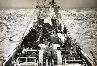 北洋写真.jpg