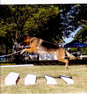 Obedience jumping
