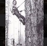 Old tree Climber.jpg