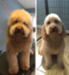 grooming-before-and-after.jpg
