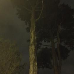 deYoung at Night