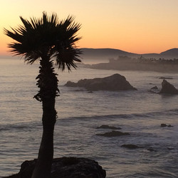 Palm at Pismo