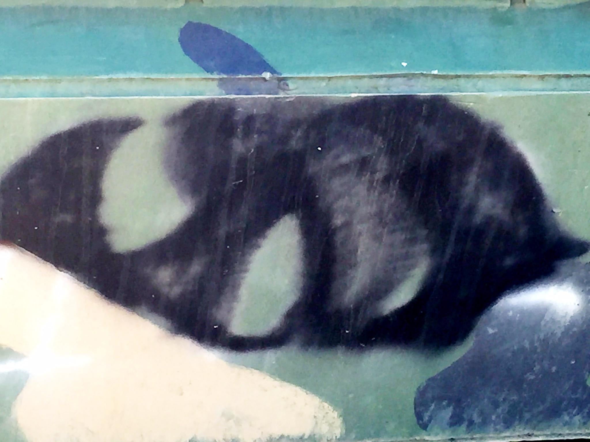 Tank Orca