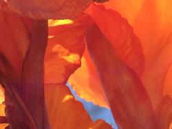 50 shades of Orange
