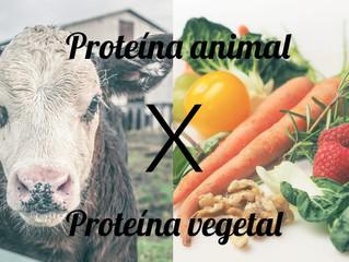 Proteína animal x Proteína vegetal