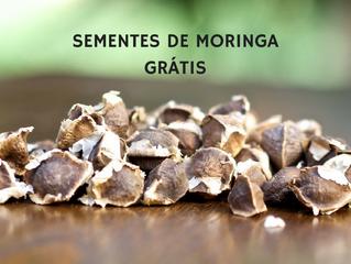 Sementes de Moringa Oleifera Grátis
