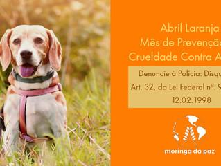Abril Laranja tem início e pretende combater a violência contra animais
