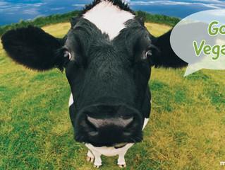 Um vegetariano evita a morte de até 582 animais por ano, diz estudo
