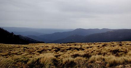 Alpine National Park - Snow Grass & View