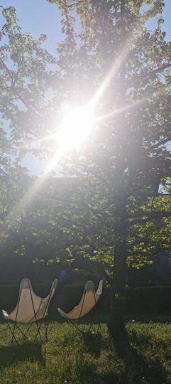 L'ombre des oliviers