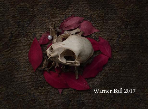 Still Life (Cat Skull)