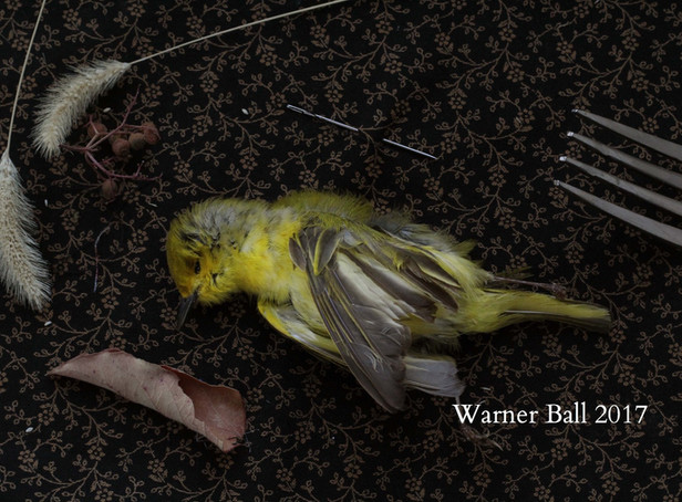 Still Life (Yellow Bird)
