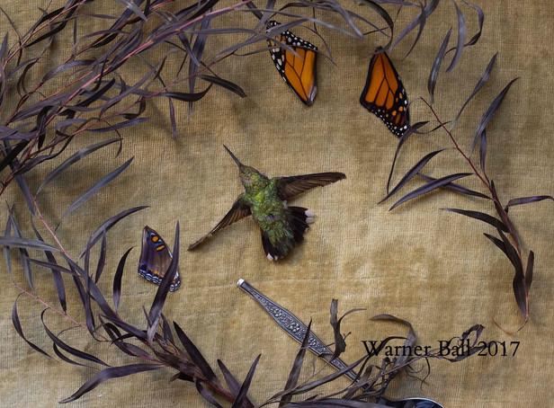 Still Life (Hummingbird)