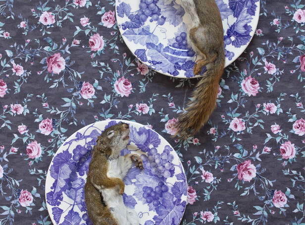 Red Squirrels on Blue