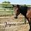 Thumbnail: Sponsor a Horse