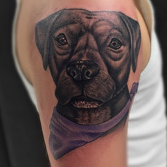 Here's a sweet dog portrait that I did l