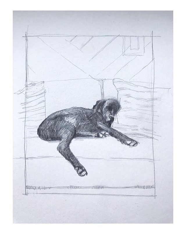 #graphitedrawing #labrador #hudsoninteri