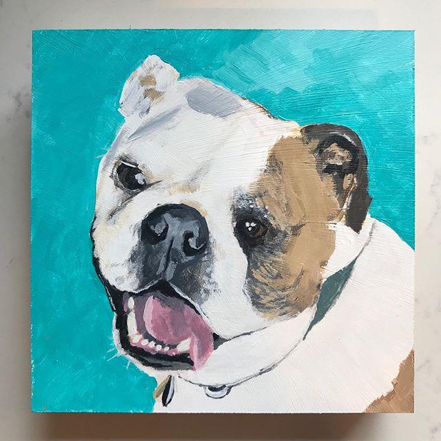 Winston  #petportrait #dogportrait #bull