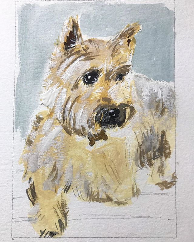 Wally #cairnterrier #wheaten #gouache #c