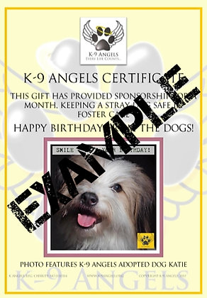 SPONSOR A DOG IN FOSTER CARE & GIVE A BIRTHDAY PRESENT!