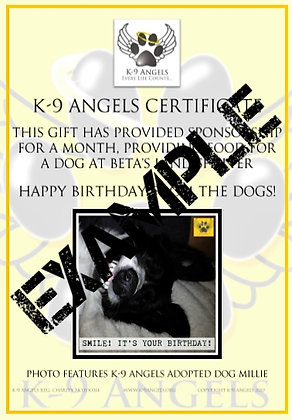 SPONSOR A SHELTER DOG AT BETA'S LAND - A PERFECT GIFT FOR A BIRTHDAY