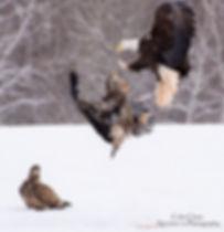 Eagle Dance WCC_6765.jpg