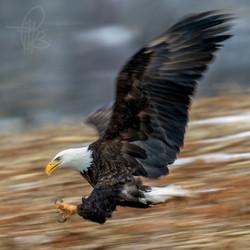 pitts 600 eagle_M4D9578e
