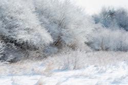 Winter Pond 2 WCC_7059