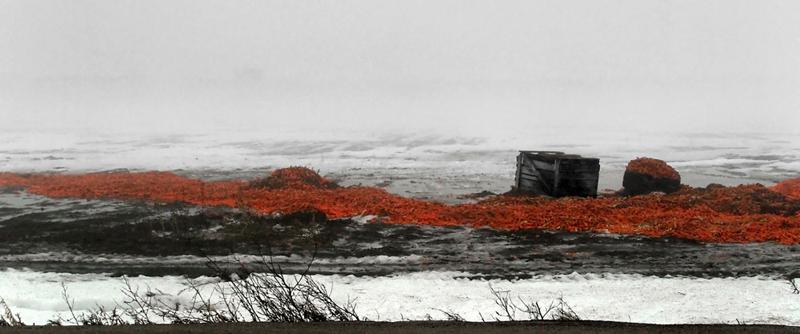 Winter-carrots