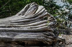 wood bonsai
