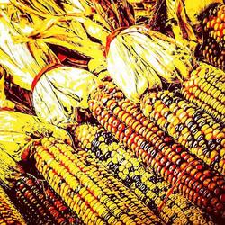 Indi'n Corn