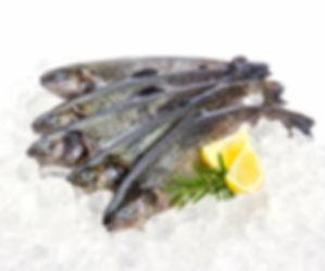 Zalmforel 2.jpg