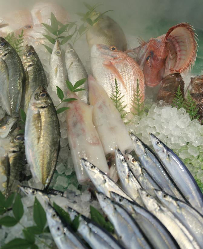 新しいメンバー 魚商 筑紫野