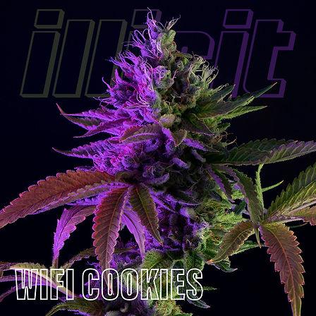illicit-two-tone-wifi-cookies-0.jpg