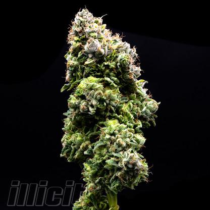 illicit-flower-prepacked-eighth-white-widow-3.jpg