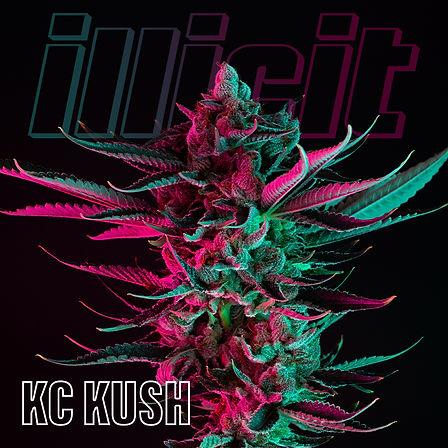 illicit-two-tone-kc-kush-1.jpg