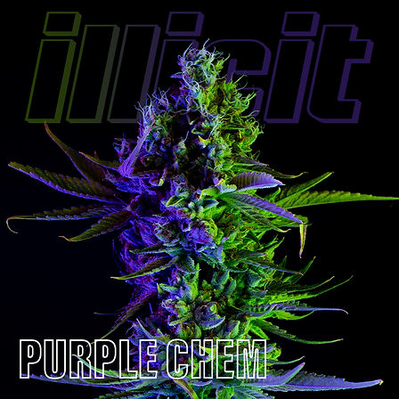 illicit-two-tone-purple-chem-1.jpg
