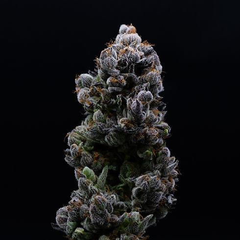 illicit-flower-prepacked-eighth-kc-kush-3.jpg